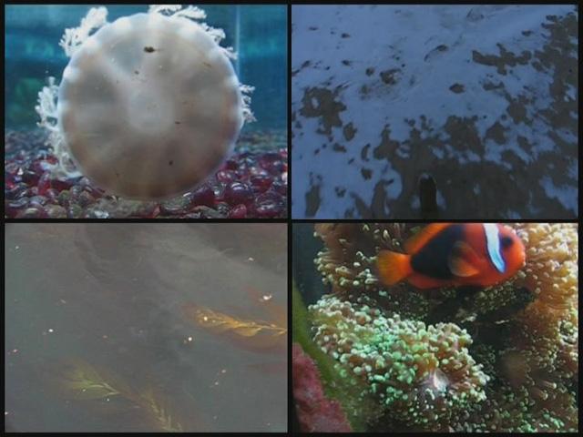 http://www.constanzapiaggio.com/web/new/files/gimgs/17_2-19-2012004.jpg
